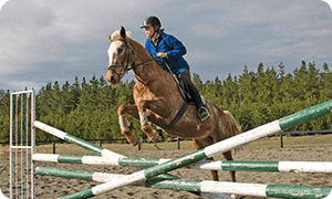 Equine Courses
